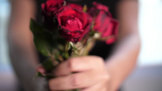 Rose, love, valentine